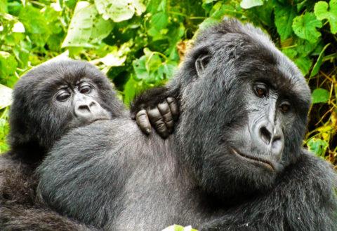 Animals of Virunga National Park