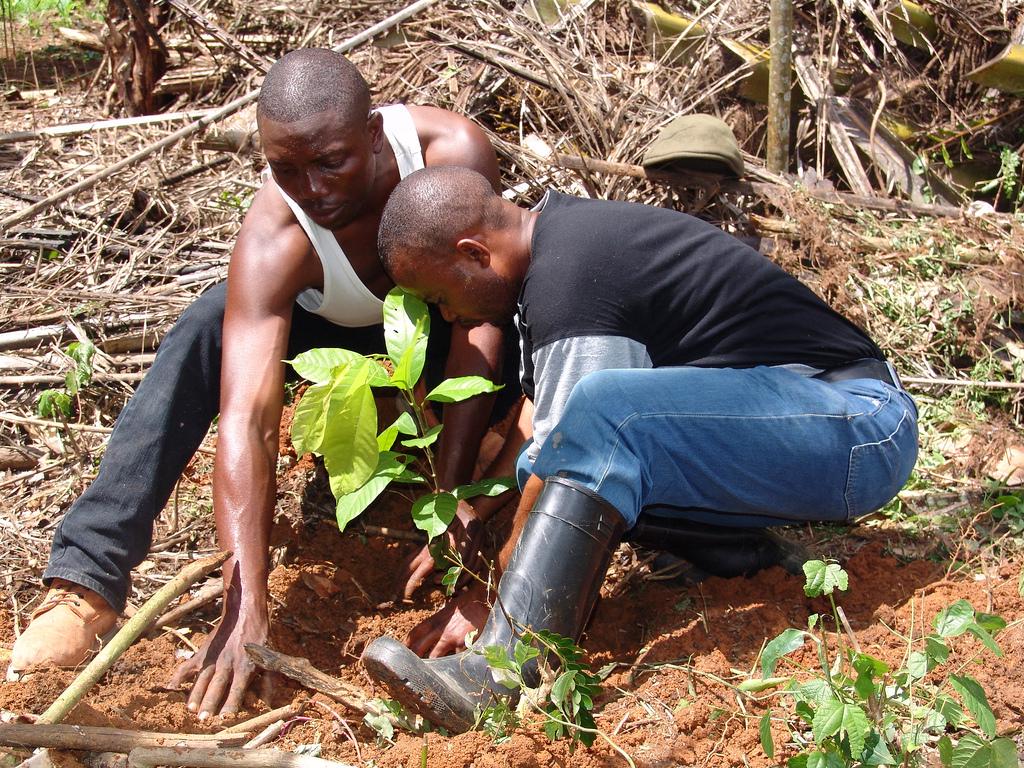 jre_gn_news_replanting-virunga